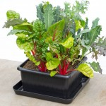 Urbin Grower Urban Grower Ecological Self Watering Plant System