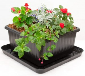 Urbin Grower Self Watering Organic Growing System Urban Grower