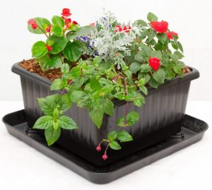 Urbin Grower Self Watering Organic Growing System Urban Grower