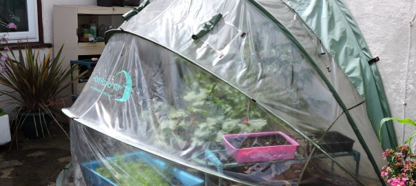 CultiCave and HortiHood Mini Plastic Greenhouses