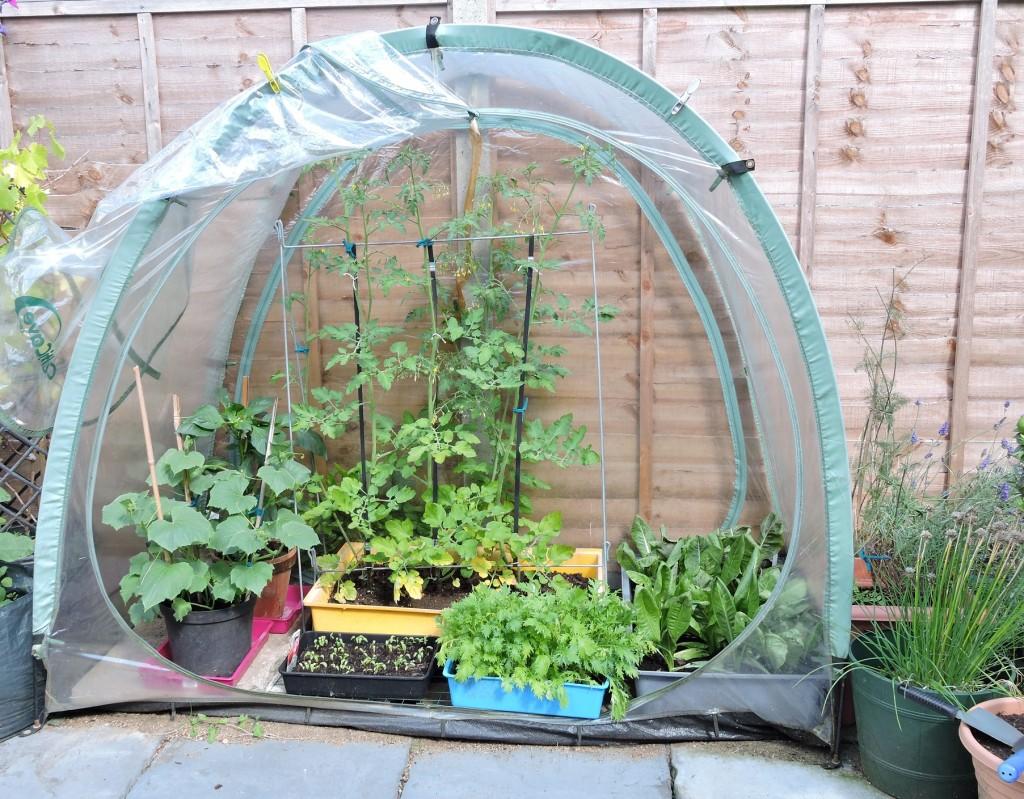 Culti Cave plastic greenhouse