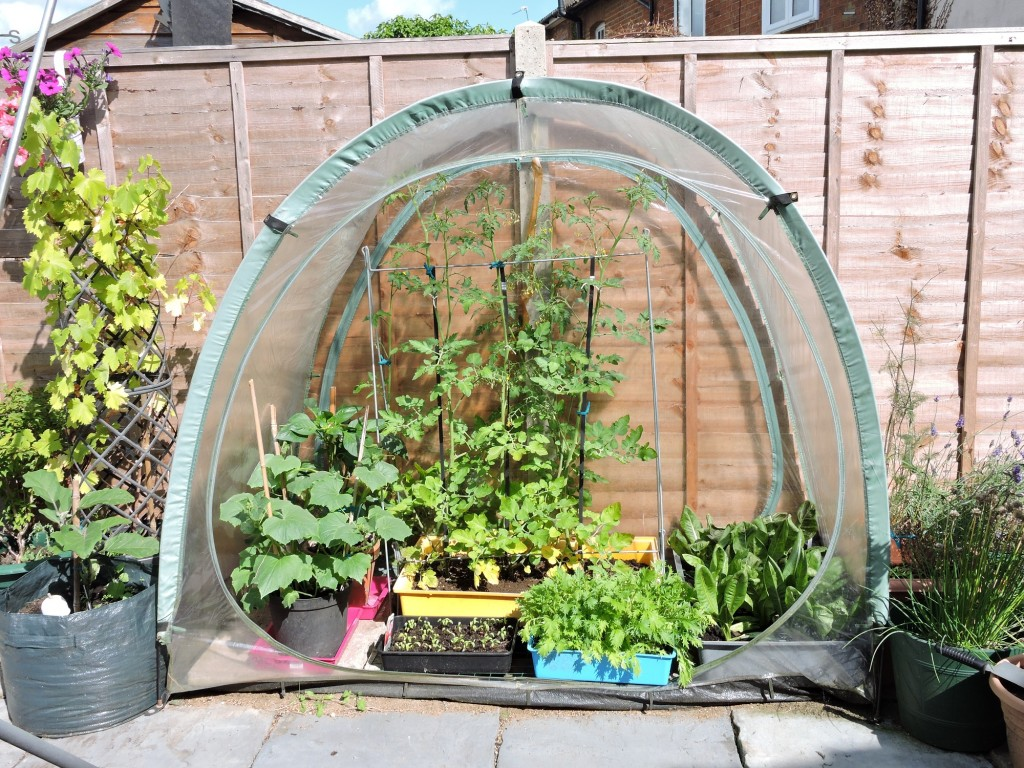 CulCave mini greenhouse